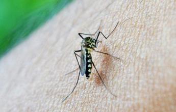 Horečka dengue v Japonsku