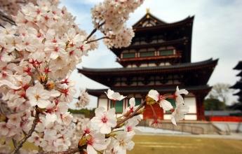 Jaro v Japonsku