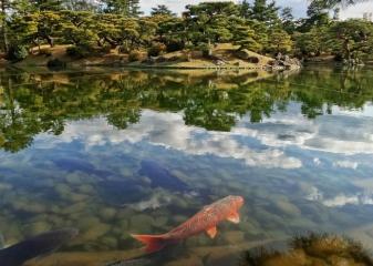 Japonsko a Havajské pláže