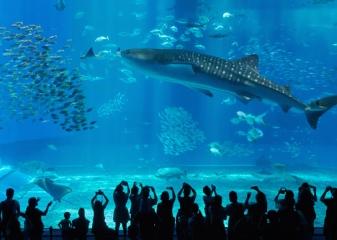 Akvárium Churaumi