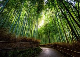 Bambusový les, Kjóto