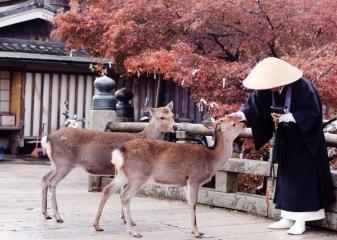 Mnich krmí jelínky šika, Nara