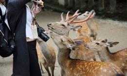 Jelínci šika Nara